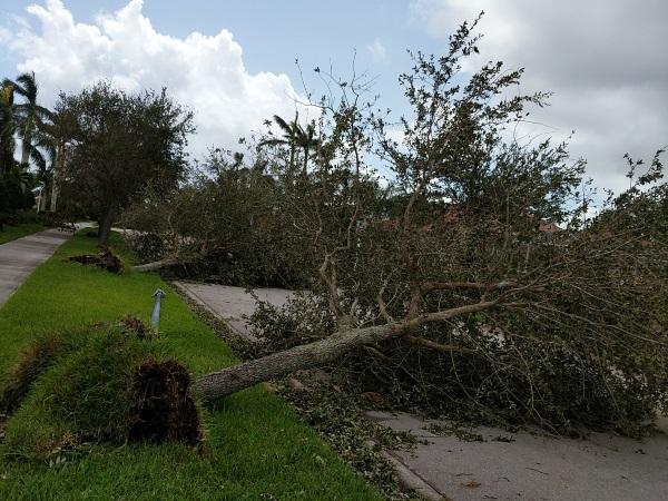 verona walk erice ct naples hurricane irma trees